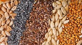 Зерна та насіння